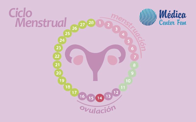 ciclo menstrual o menstruación
