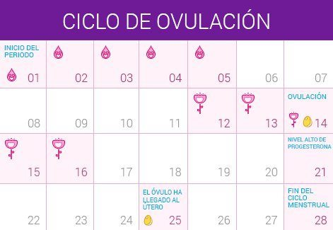 calculadora de ovulación. alt