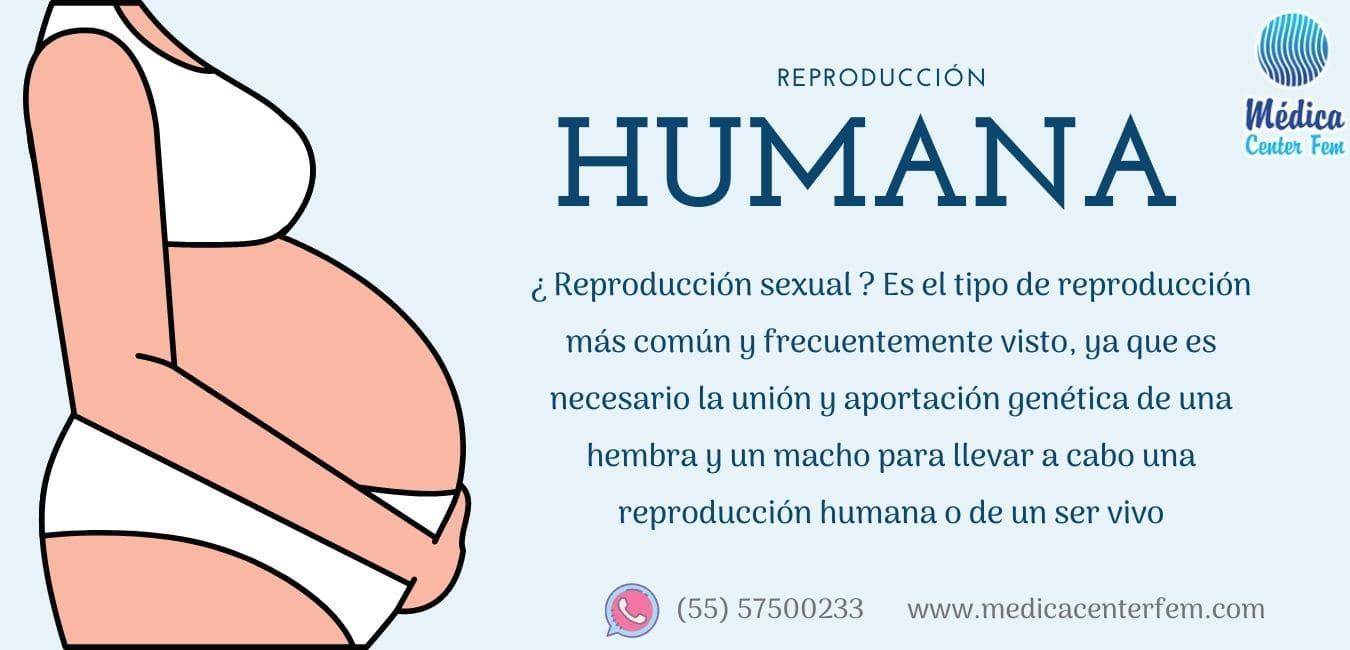reproduccion-humana-