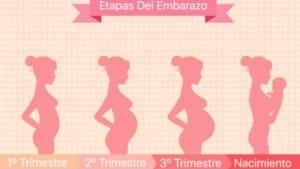 etapas-del-embarazo